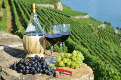 Wine in a vineyard