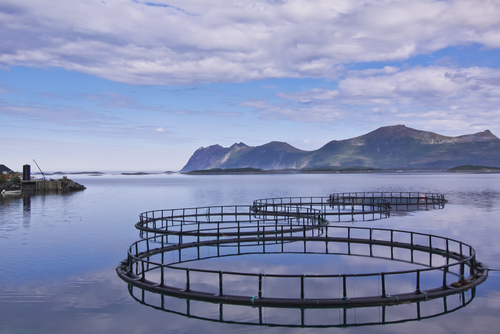 Aquaculture salmon farm in Norway