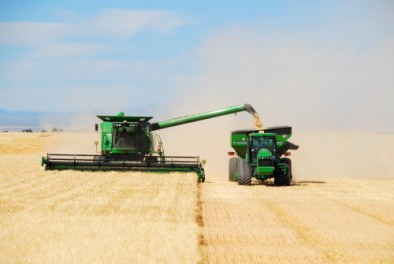 Grain being unloaded while harvesting